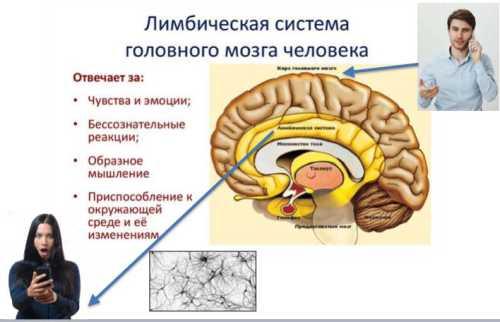 """На картинке показано: кора головного мозга принимает стимул """"Парень рассказывает мне что-то по телефону"""": а лимбическая система бессознательно интерпретирует это чувствами: """"Это хорошо"""" или """"Это плохо"""""""